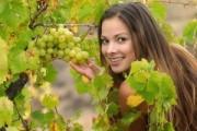 Характерные особенности столового винограда